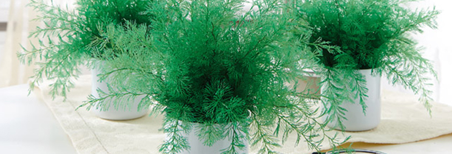 La plante Neptune