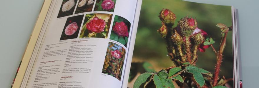 Les livres des roses