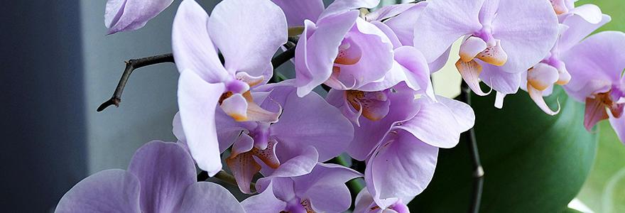 engrais naturels orchidees